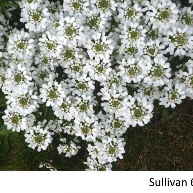 Sullivan 6A